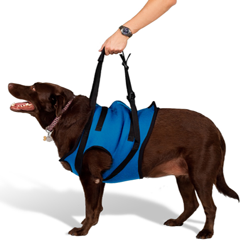 Mobility Harness - Front