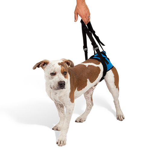 Mobility Harness - Rear